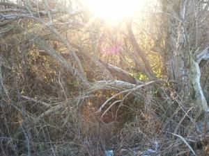 Baum Winter Sonne Licht