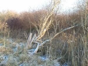 Baum Winter Licht Schnee