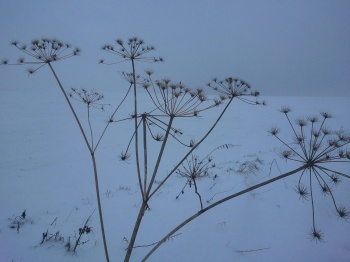 Winter, Blume,