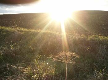 Sonne, Licht,