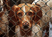 animal-welfare-1116205_960_720