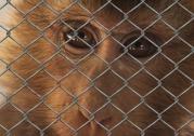 monkey-509101_960_720